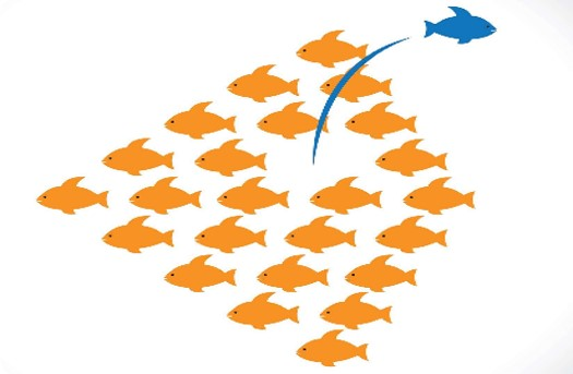 A group of orange fish with one blue fish swimming out of the pack in the opposite direction.